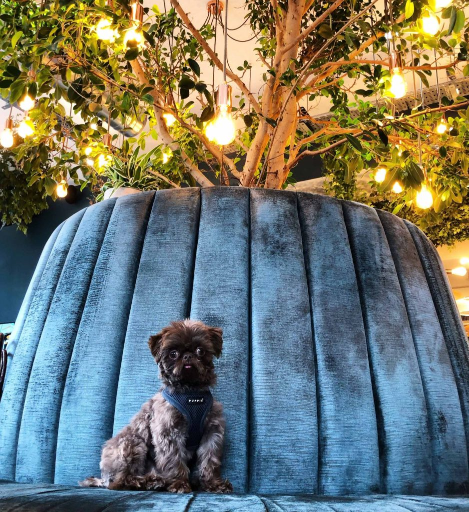 Small dog on round sofa under a plant and lamps at dog-friendly coworking space Uncommon