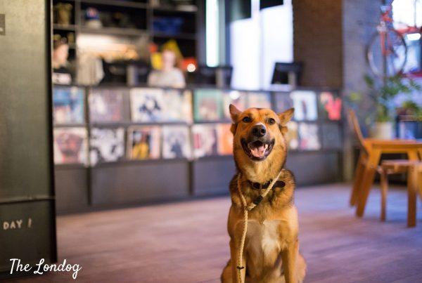 Large dog waiting at the Lobby at Ace Hotel London before Pup's Gourmand dog menu tasting