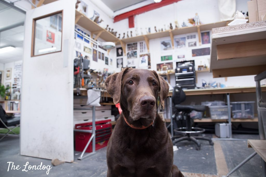 Photo of Labrador dog at dog-friendly workshop of puppeteer Andy Gent in London