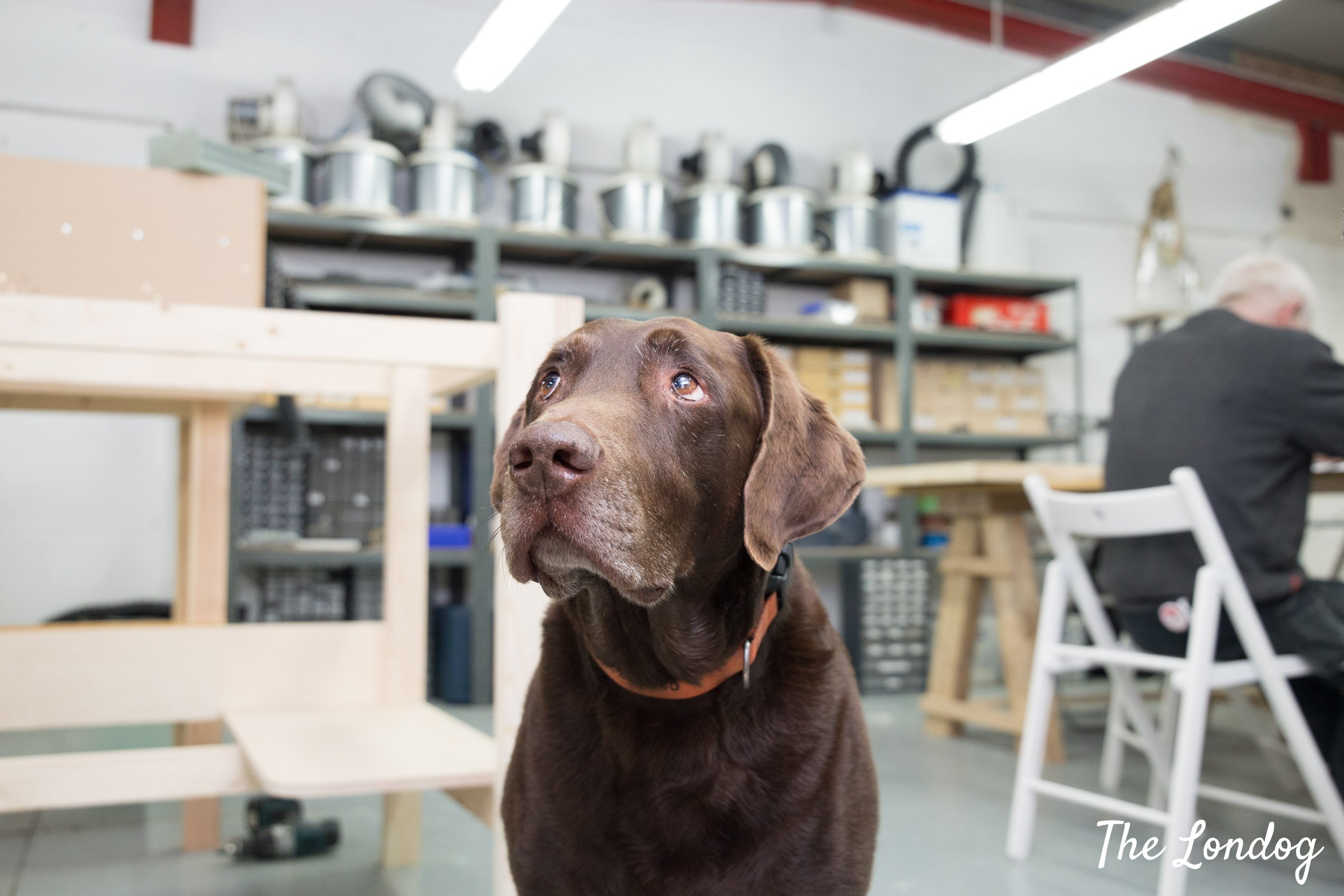 Charlie the labrador at Andy Gent studio
