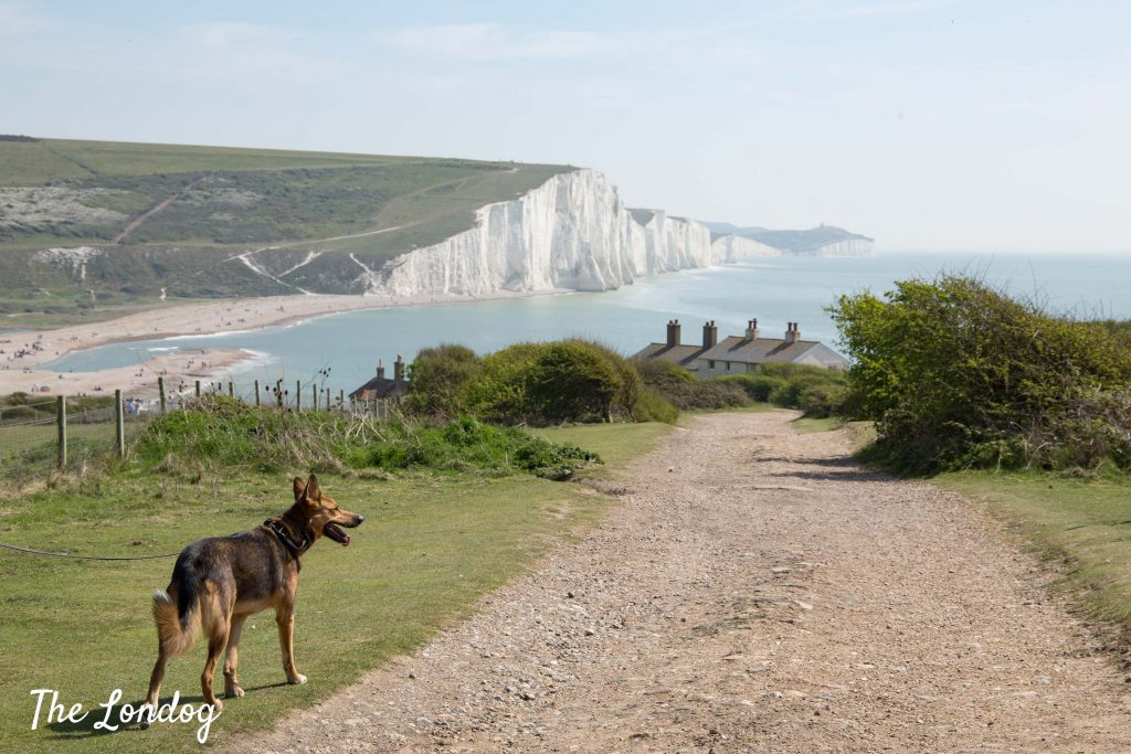 View of Cuckmere Haven from the trail before reaching the beach with large dog