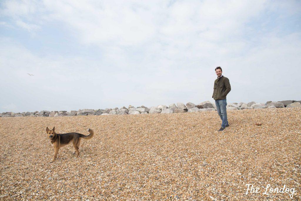 Dog on pebbles beach