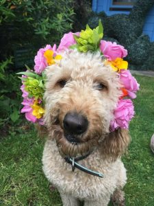 Dog with flower crown on her head