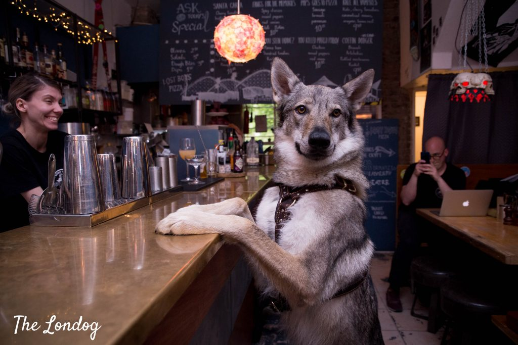 Wolfdog standing with paws on bar counter at Lost Boys Pizza