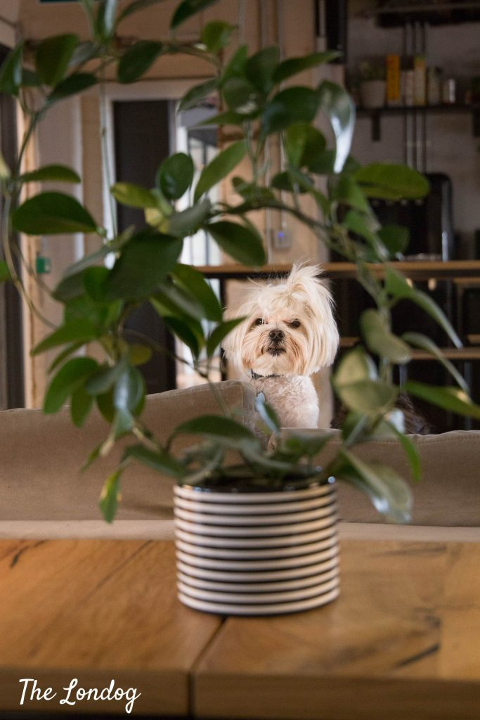Small white dog in plant frame