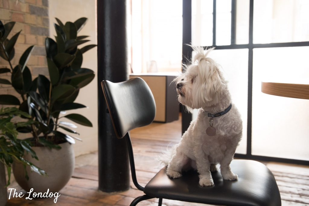 office dog sits on a chair with a plant in the background