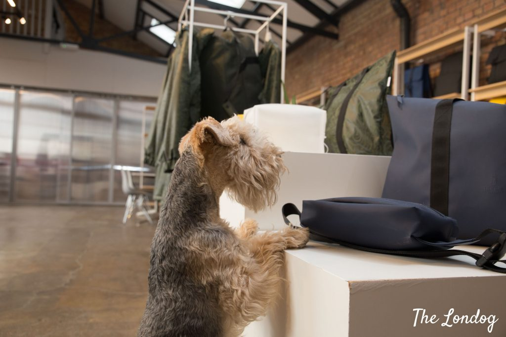 Office dog perches on stand to see bags