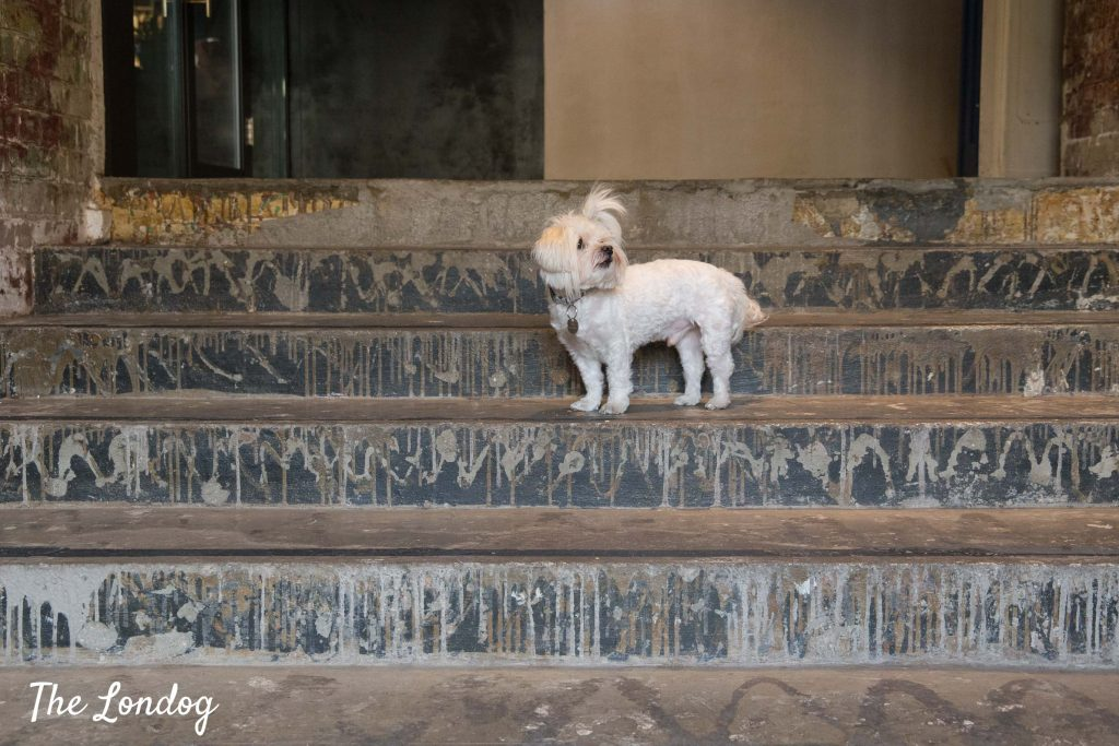 White small office dog stands on staircase