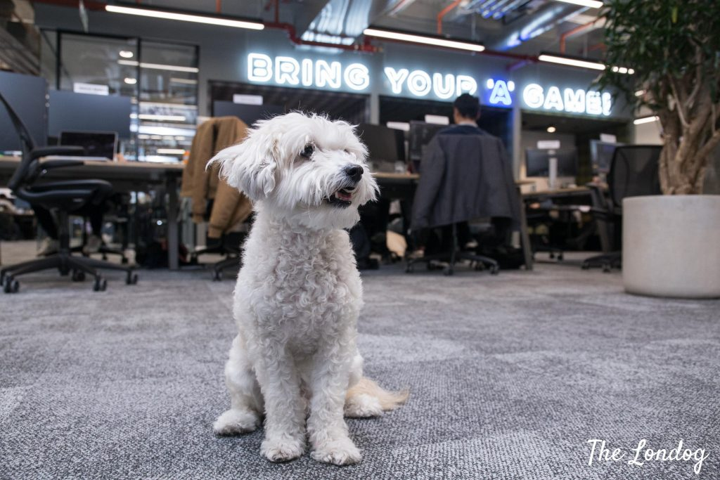 """Small office dog on grey carpet with workers on the background and """"Bring your A game"""" motto neon light sign"""