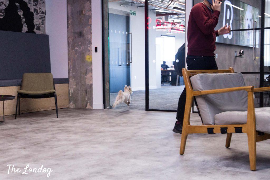 Dog running through a door at the office