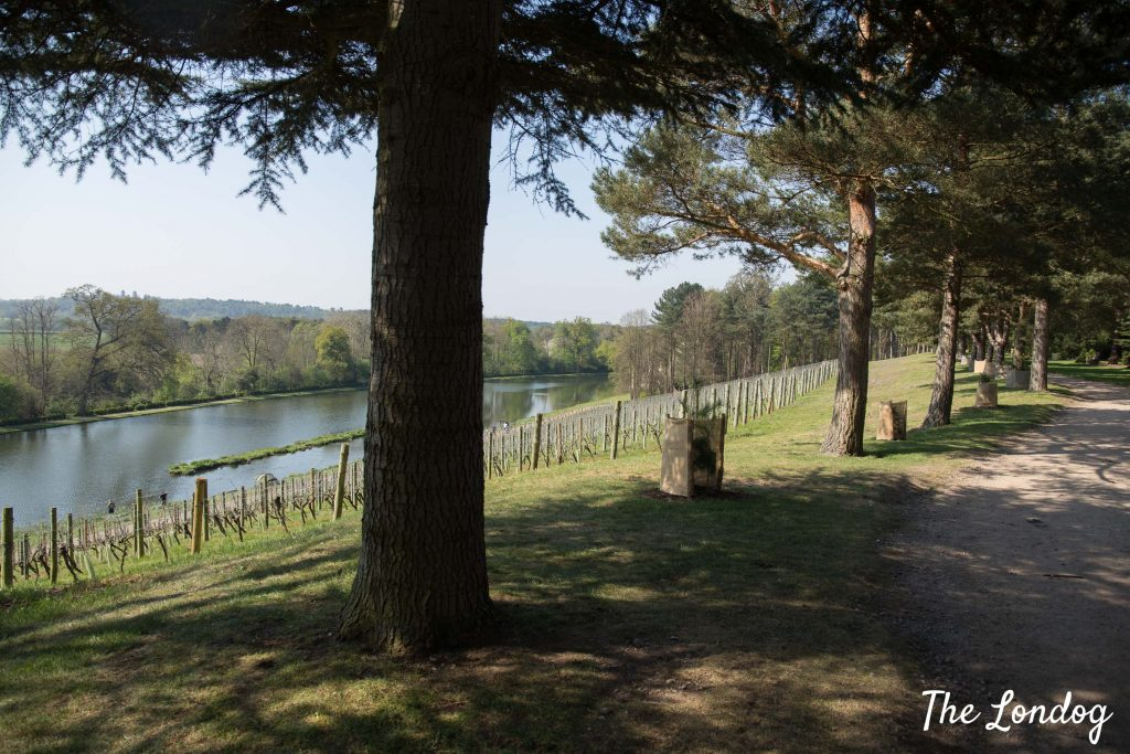 Vineyard at Painshill