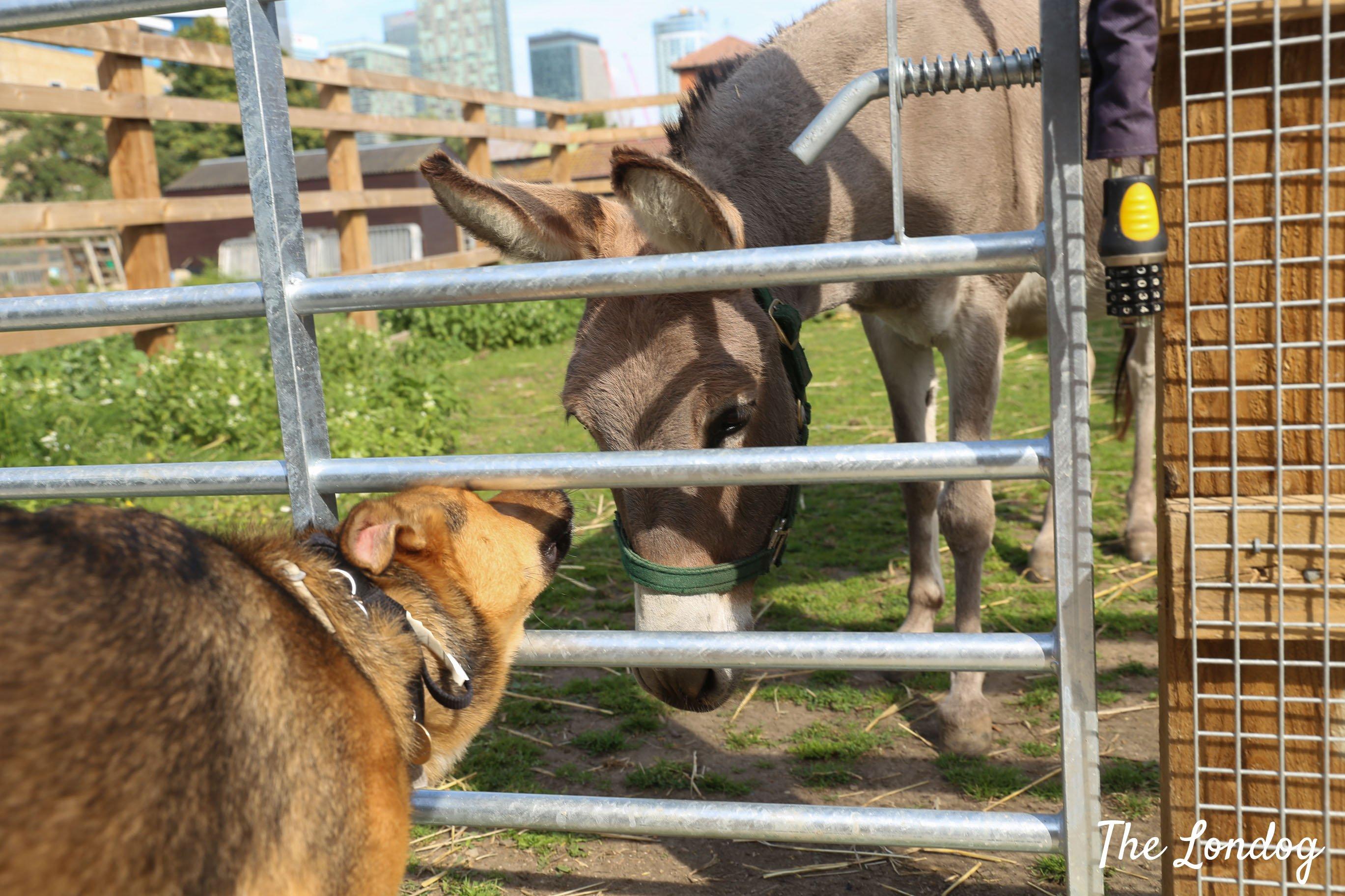 Dog sniffing donkey at dog-friendly city farm
