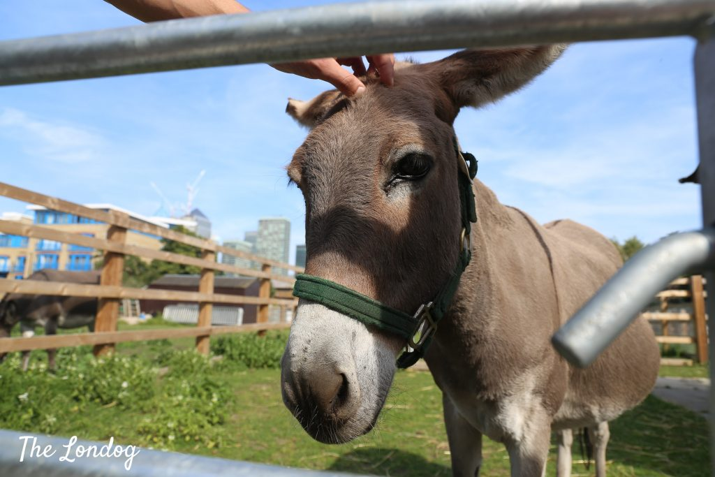 donkey being petted at city farm