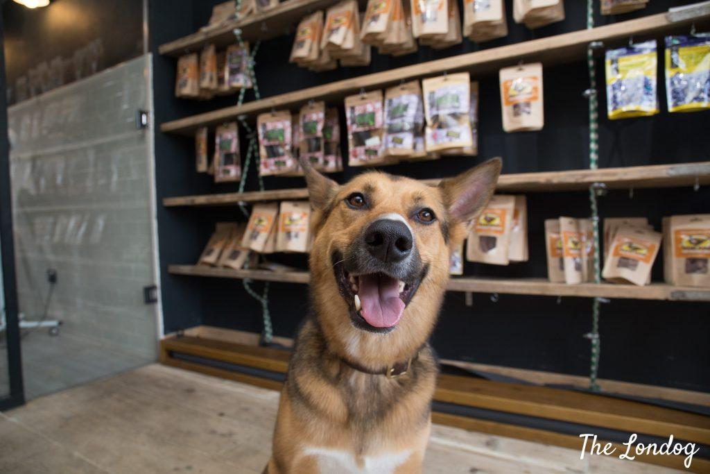 dog at City Paws Club shop