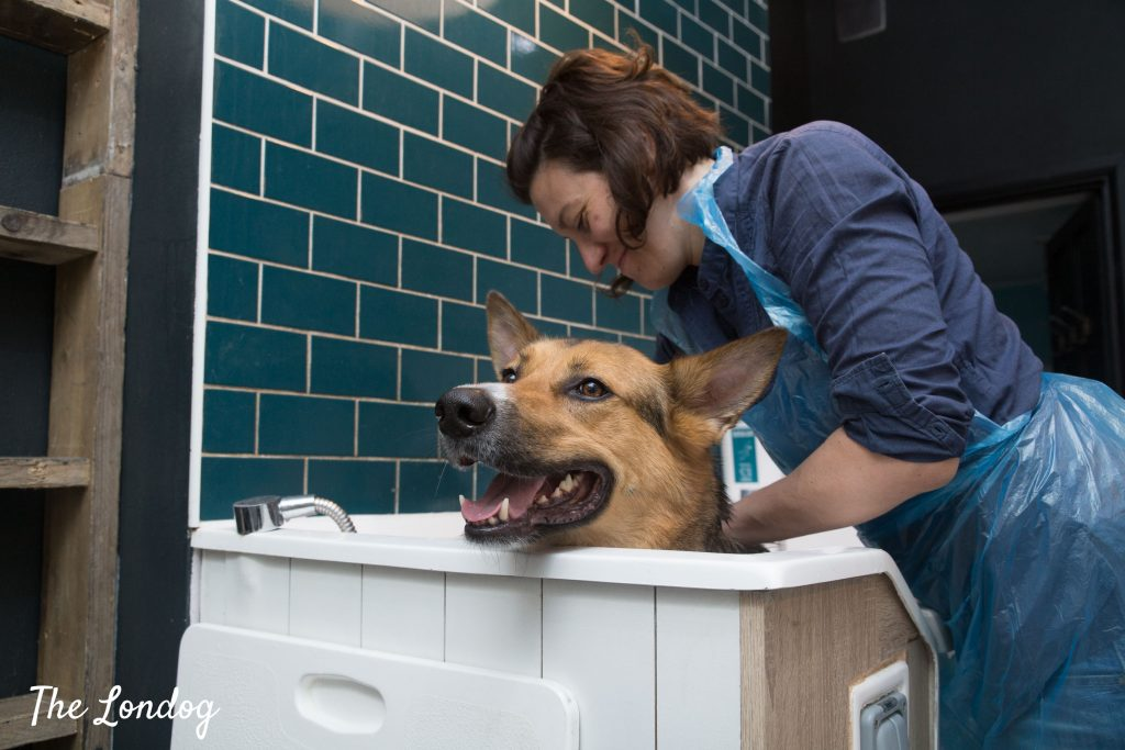Owner washes dog at self-wash