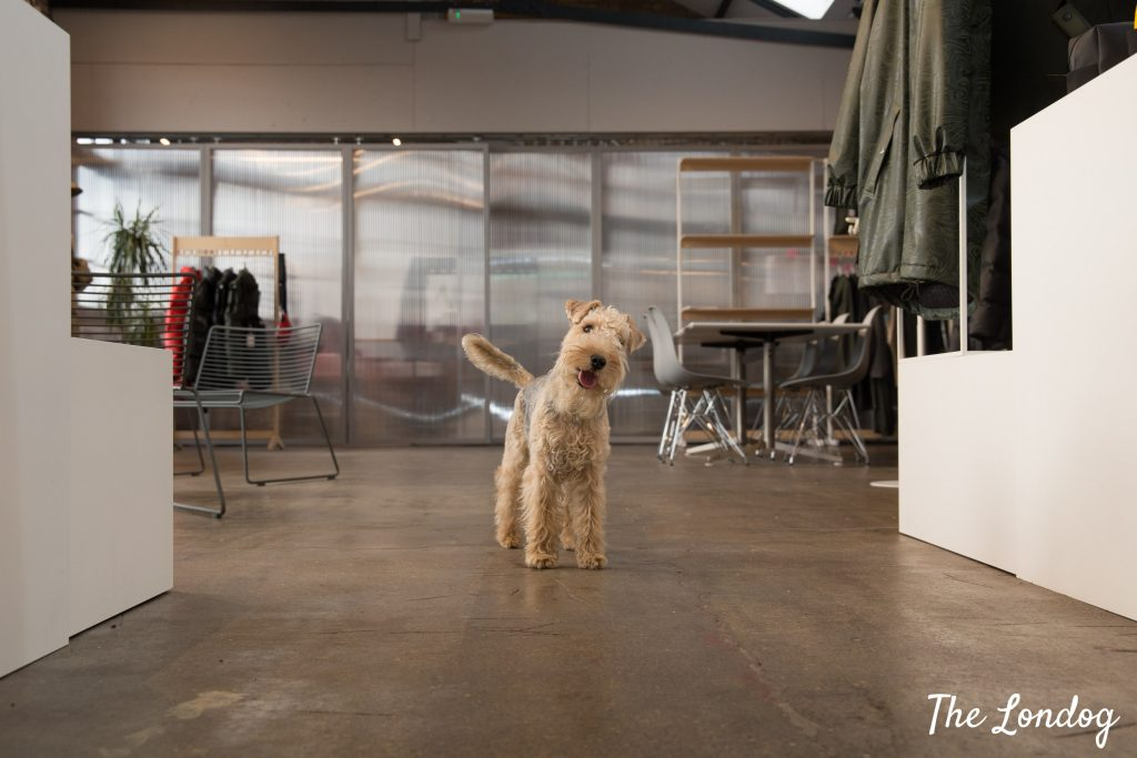 office dog on concrete floor