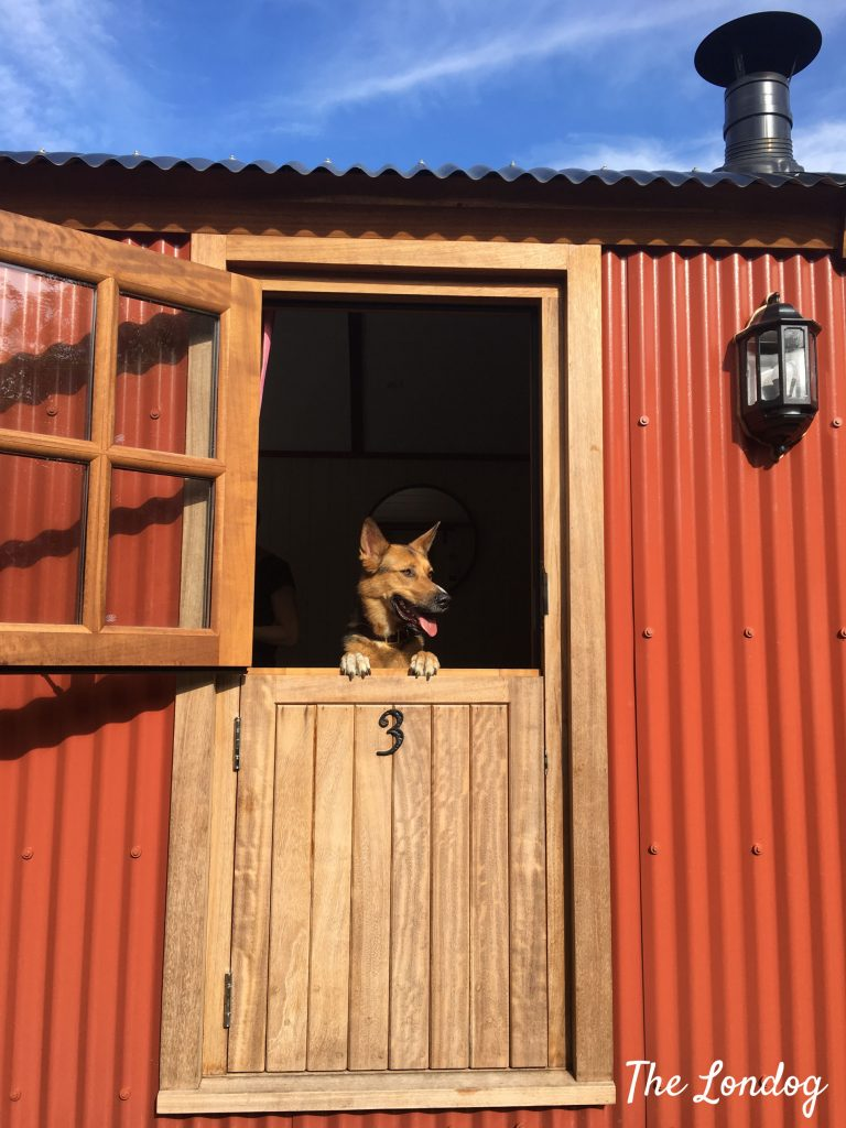Dog at shepherd's hut