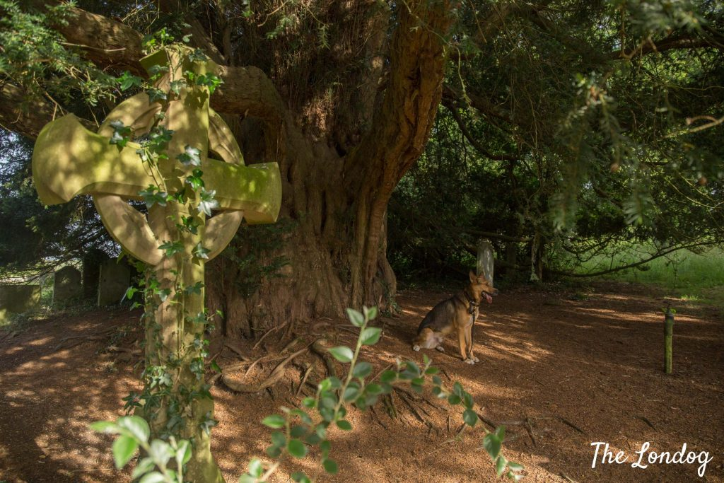 Dog at Hambledon cemetery
