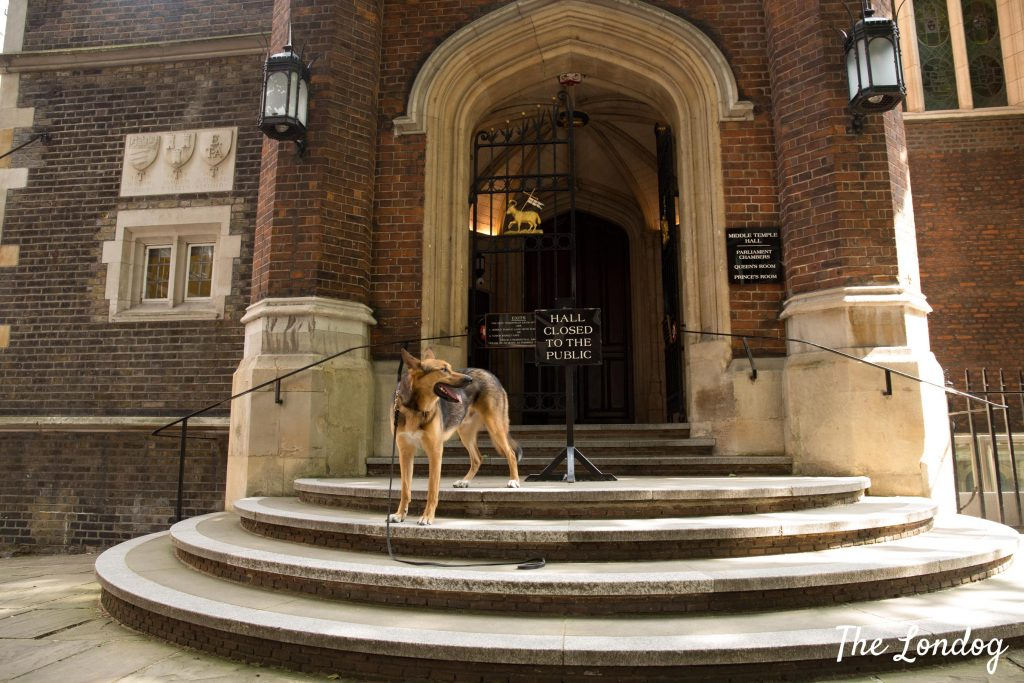 Dog standing on stairs at Mid Temple