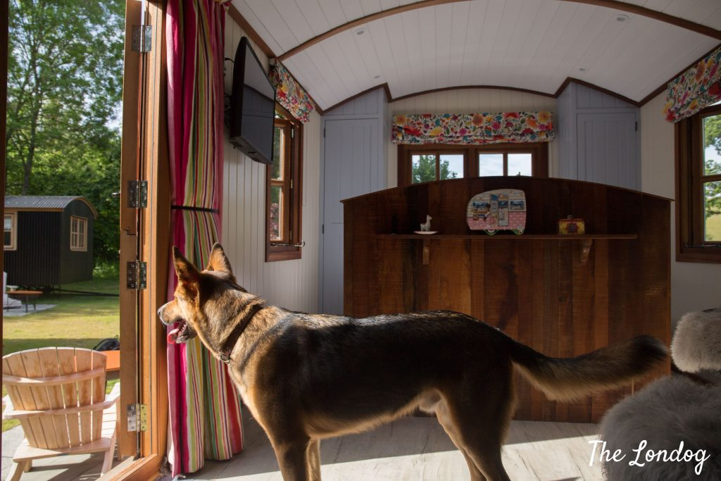 Dog inside Shepherd's Hut