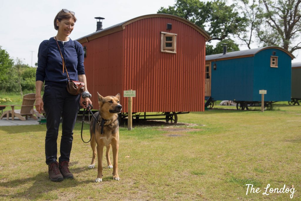 Woman and dog near the shepherd's huts at the Merry Harriers