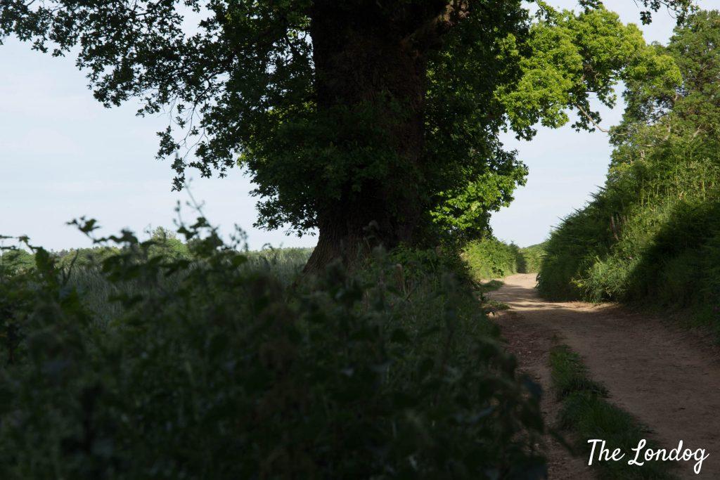 Bridleway near Hambledon