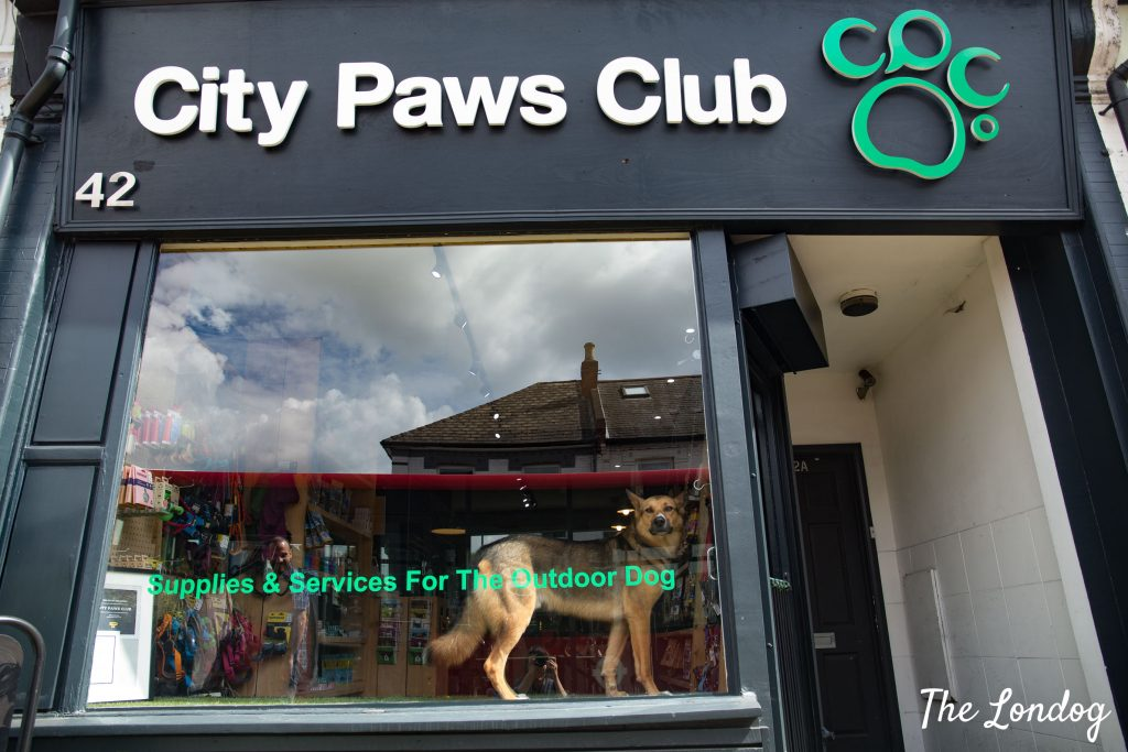 Photo in the window of City Paws Club store