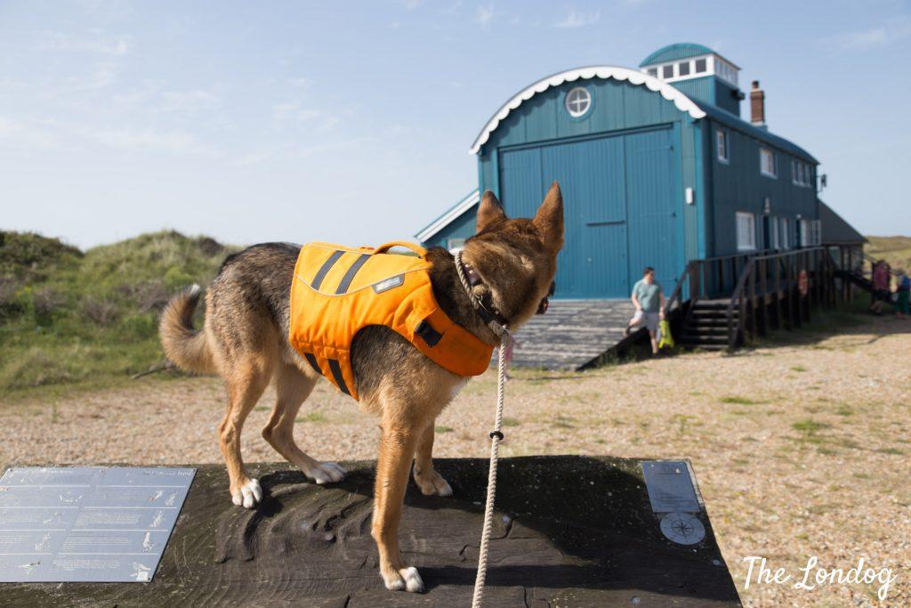 dog at Blakeney Point near lifeboat house