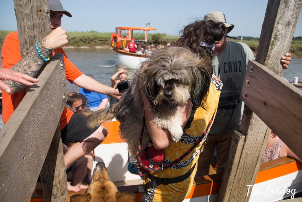 Dog and owner getting on a boat