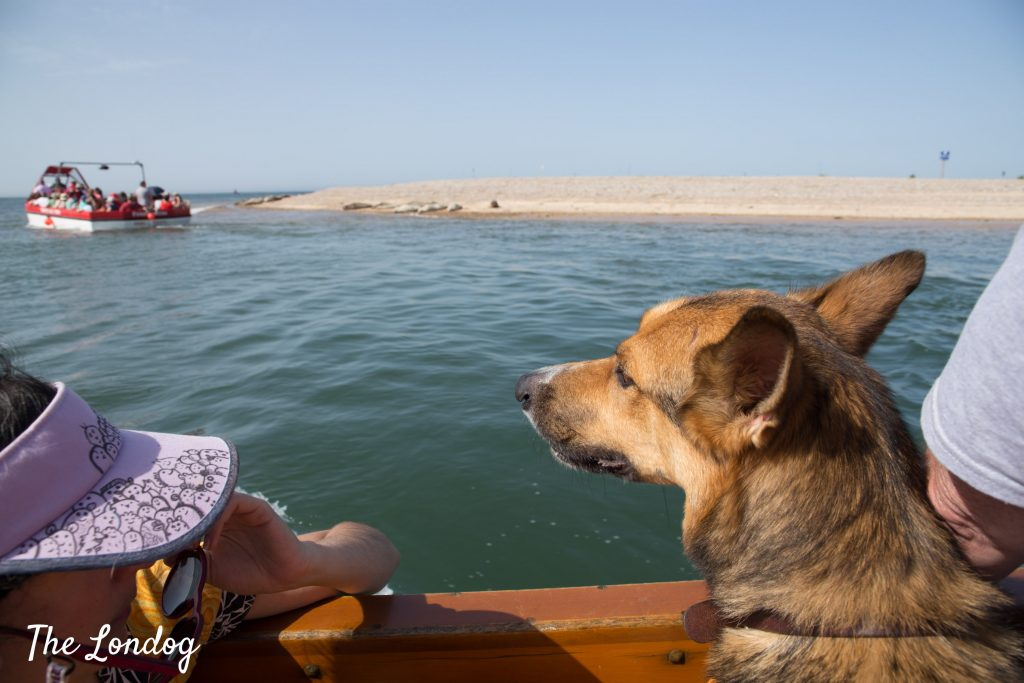 dog looking at seals from boat