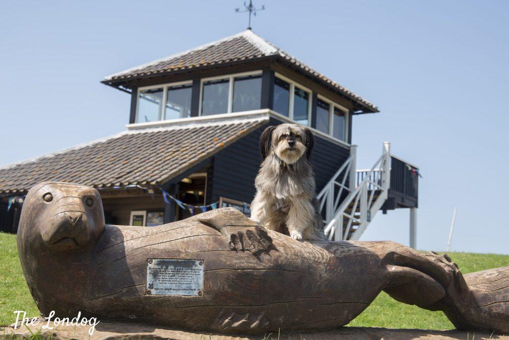 Dog at Morston Quay