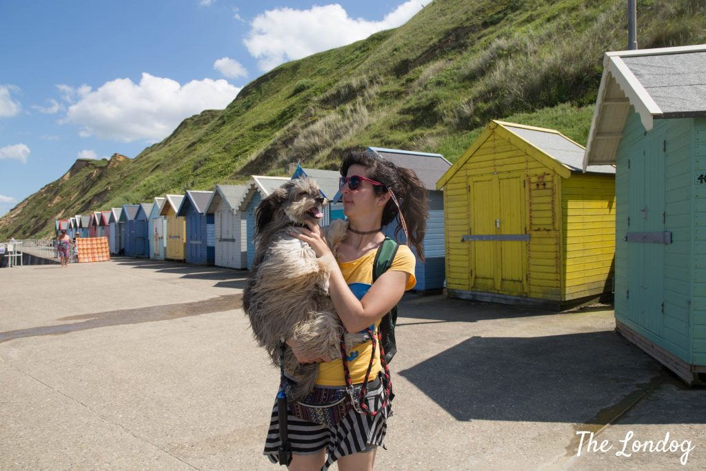Dog and girl near colourful beach huts in Sheringham