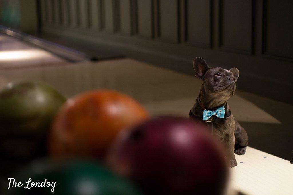 Dog near bowling balls