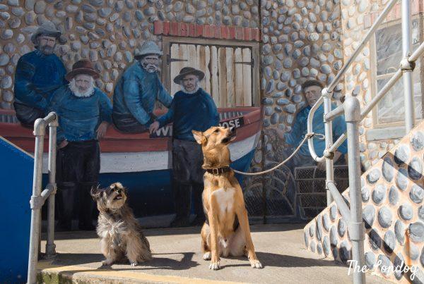 The Londog | London Dog Blog | Tips - Stories - Guides