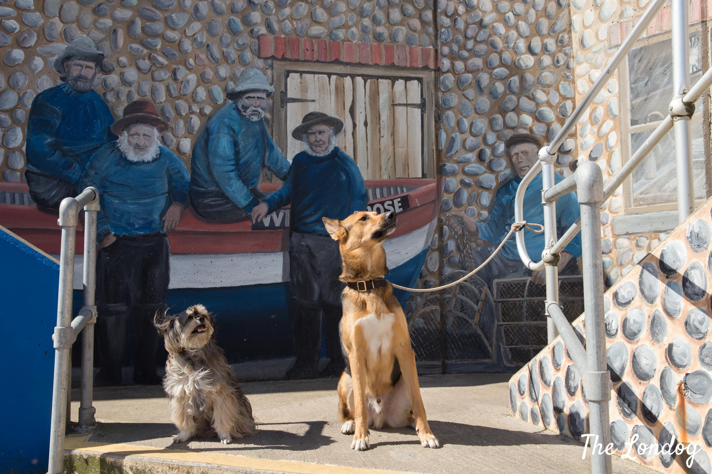 Two dogs sit in front of painted wall in Sheringham