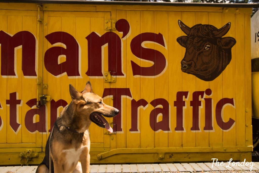 dog in front of old train carriage