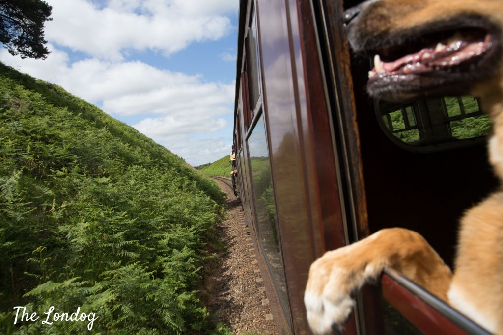 large dog on North Norfolk Railway