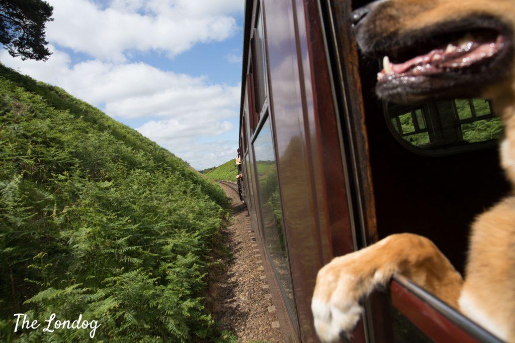 large dog on North Norfolk Railway