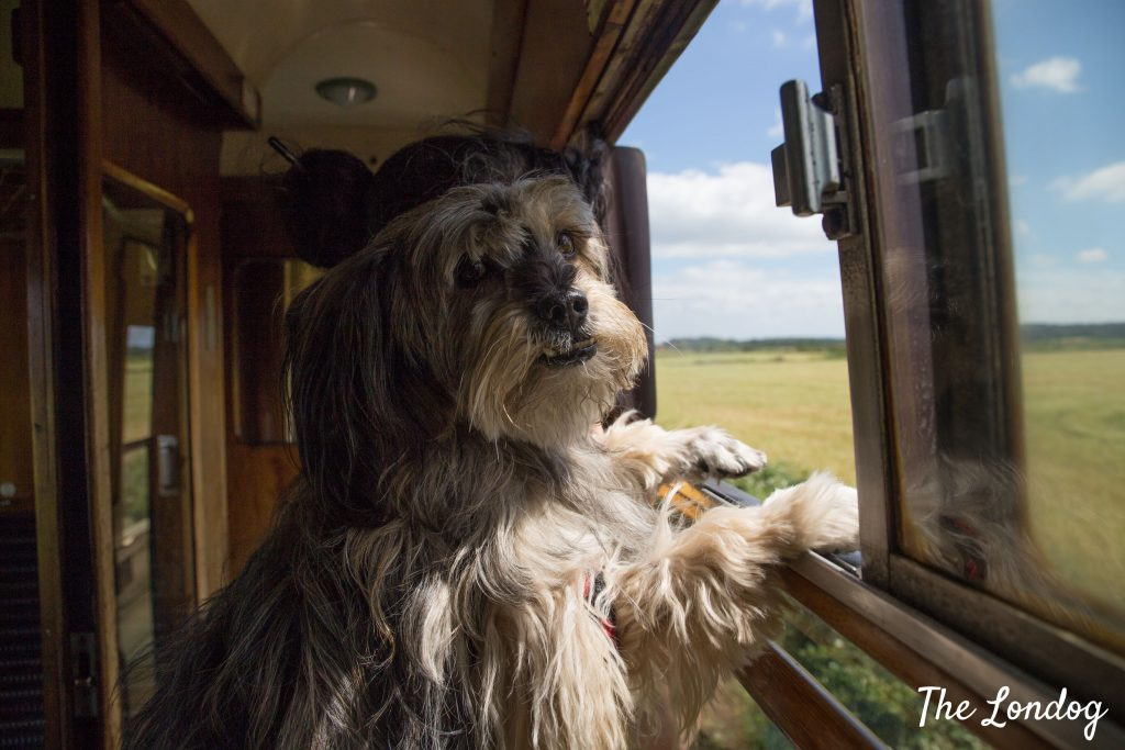Dog with paws on the window of steam train carriage