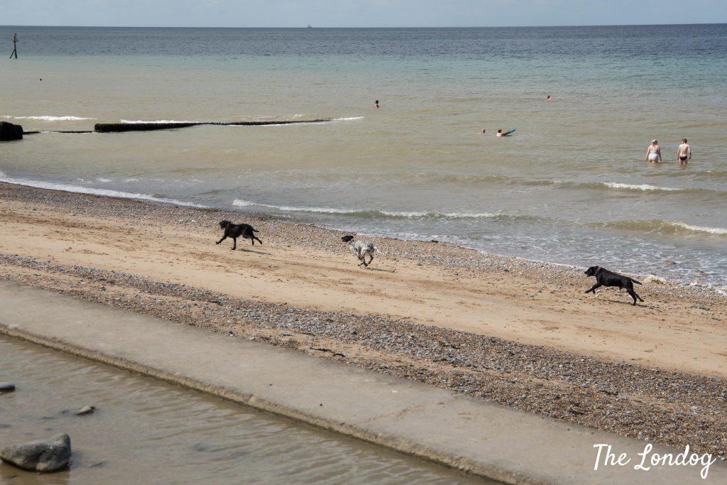 dogs running at Scheringham beach