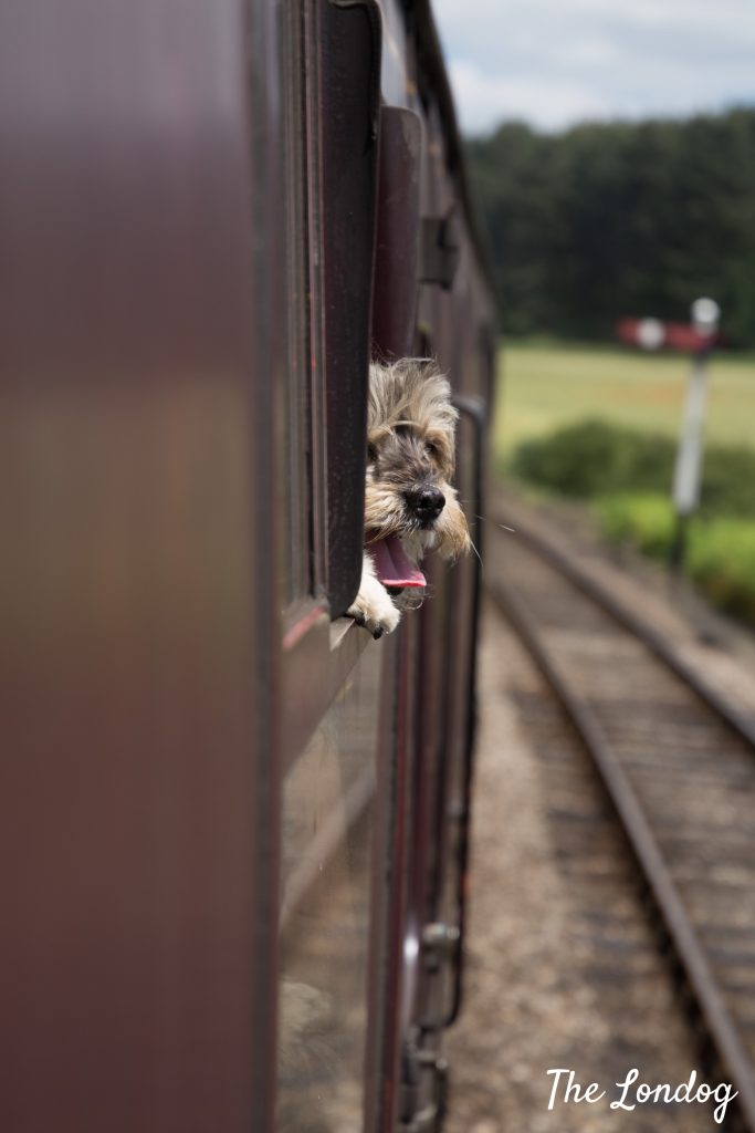 dog head from train window