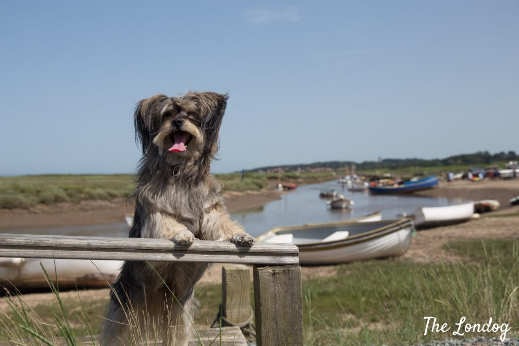 Rescue dog at Blakeney Point