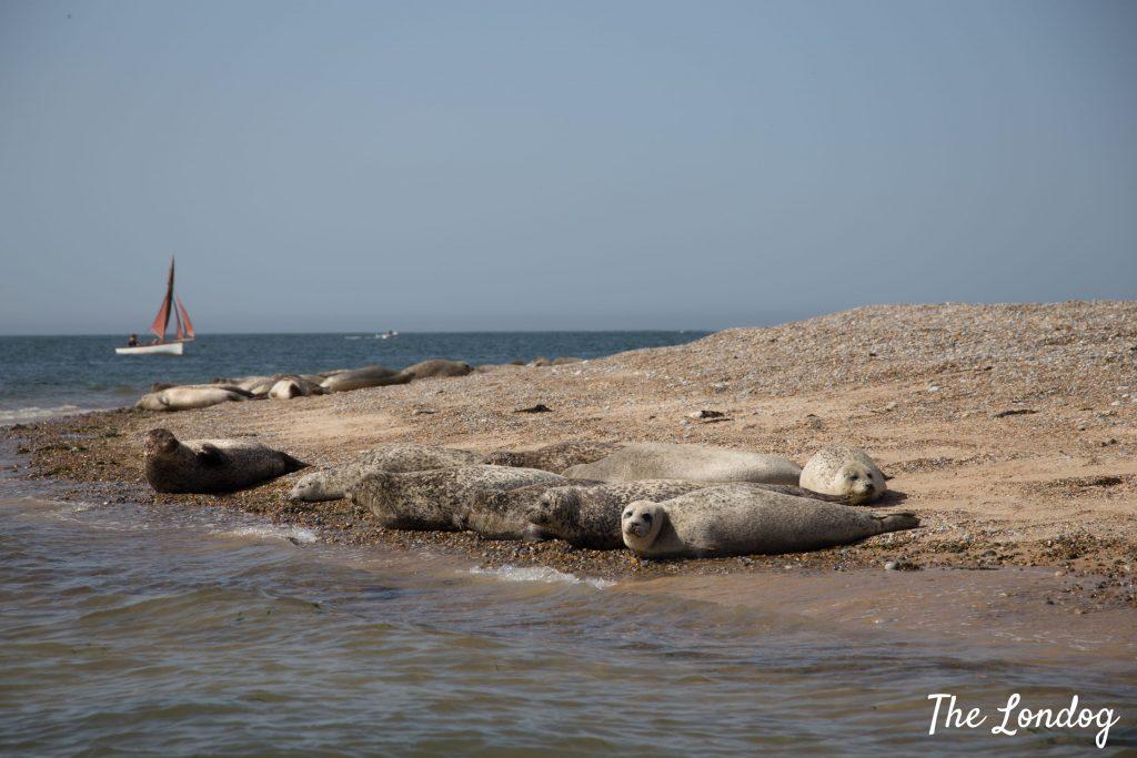 Seals on the beach Blakeney Point
