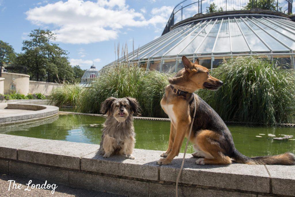 Dogs neat fountain in Norwich