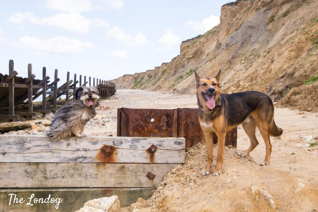 Dogs on dog-friendly Sheringham beach