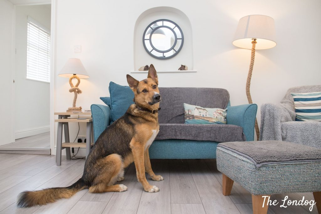 Dog in living room at the Beach Hut cottage