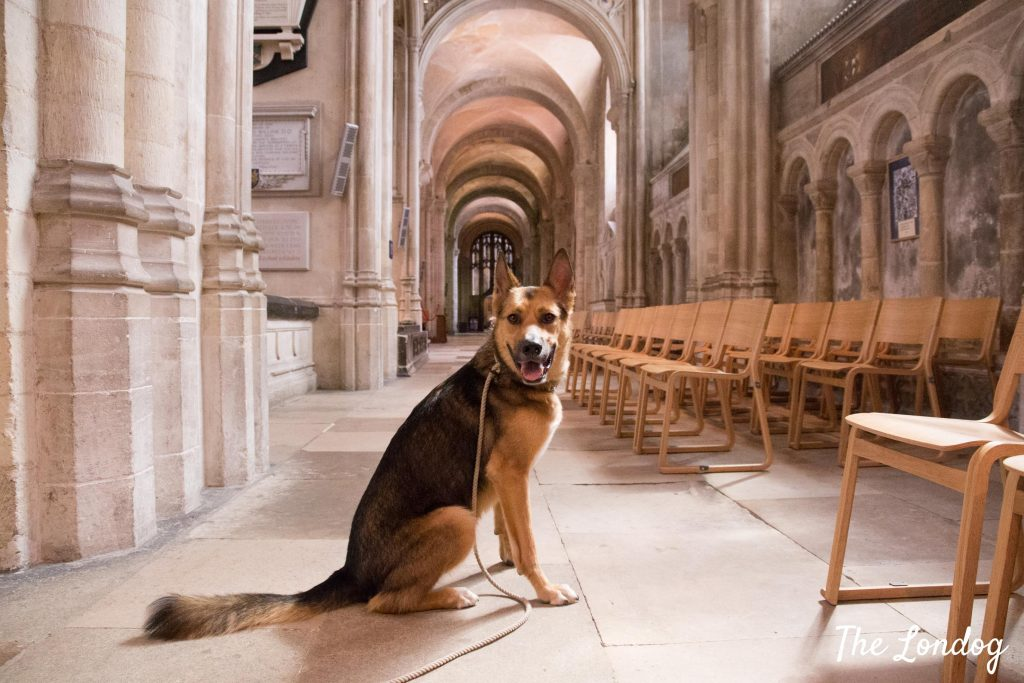 dog at Norwich Cathedral