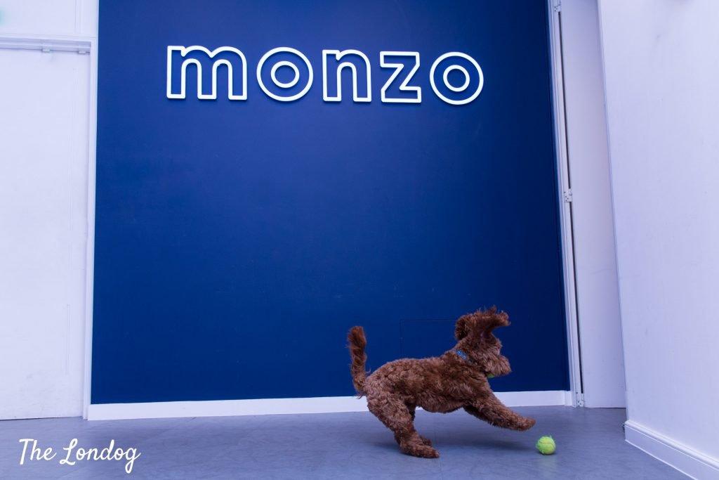 Office dog plays under Monzo logo