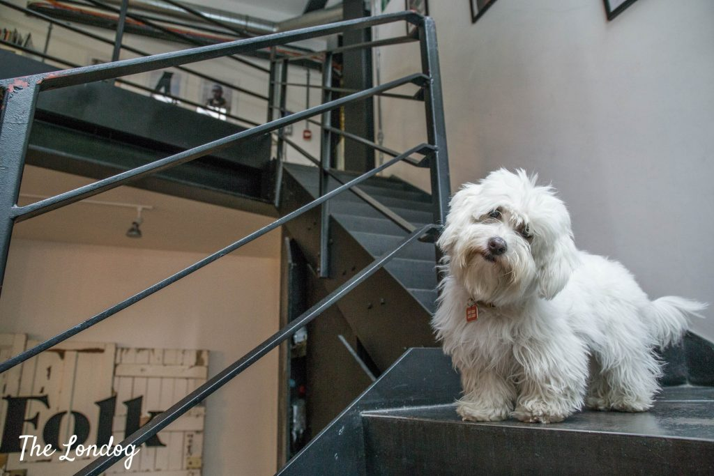 Small white dog on top of staircase at the office