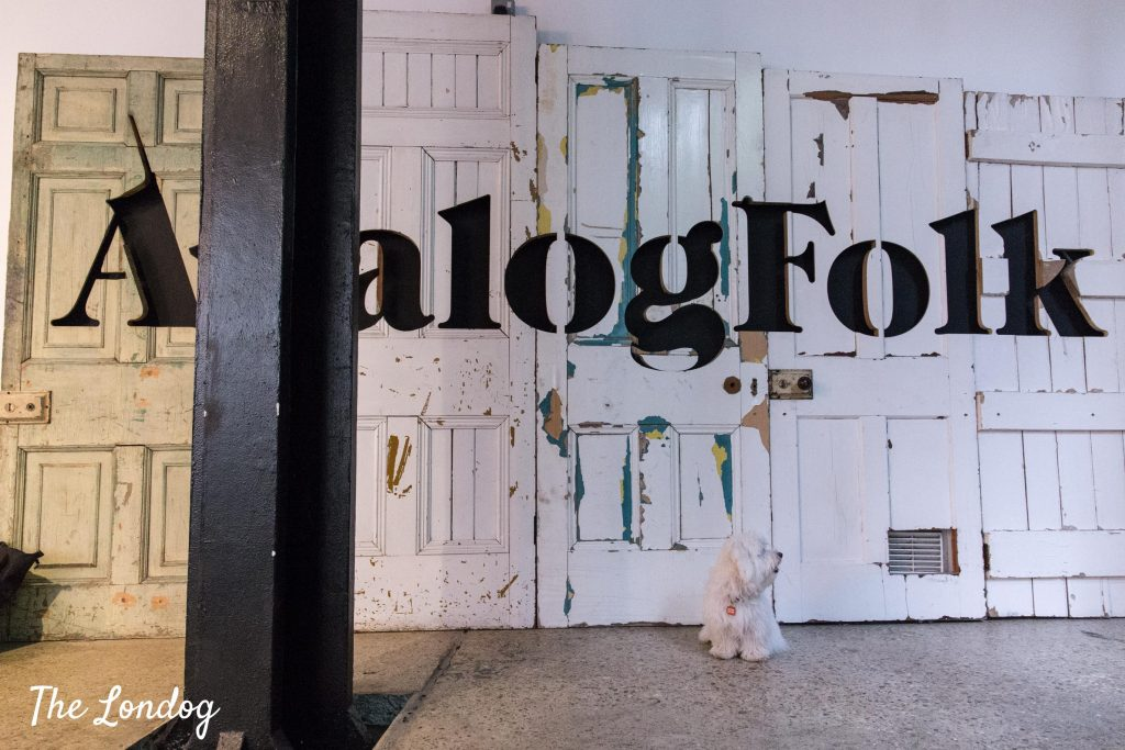 AnalogFolk logo on old doors and dog